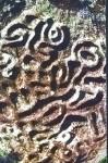 medium_Duanama_culture_ancestrale_Kogis_tayronas.jpg