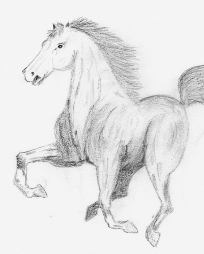 cheval de mon père.jpg